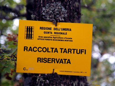 truffle-hunt-umbria-italy